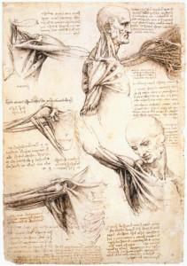 1etudes_anatomiques_de_lepaule_windsor